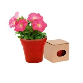 Planta Maceta DUO - Petunia